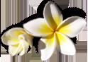 Fleurs île de la Réunion